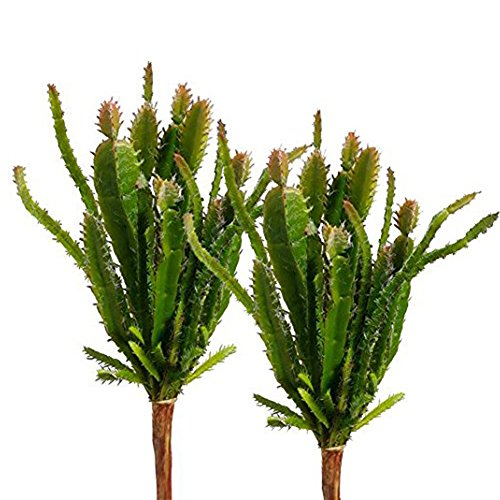 Lopkey Fake Succulent Flora Artificial Cacti Plants set of 2