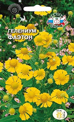 Russian Flower helenium Phaeton (Hoop, Golden Yellow). Euro 0.1