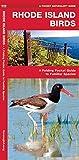 Rhode Island Birds: A Folding Pocket Guide to Familiar Species (A Pocket Naturalist Guide)