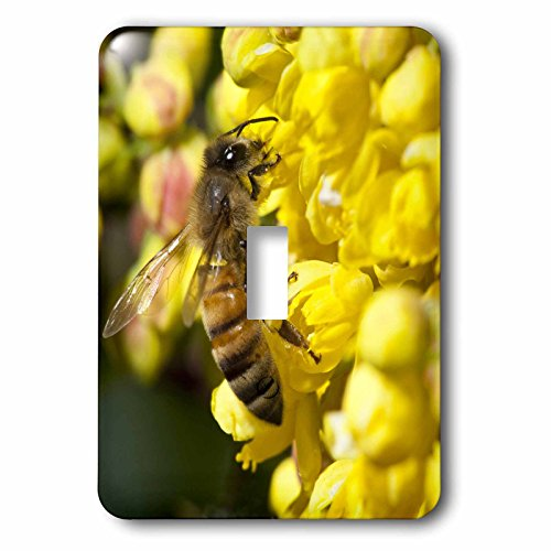 grapes light switch cover - 8