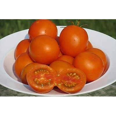 Organic Jaune Flamme Tomato Seeds (25 Seeds) : Garden & Outdoor