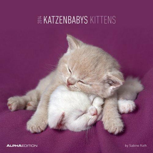 Katzenbabys Broschürenkalender 2014 - Kittens 2014 Sabine Rath