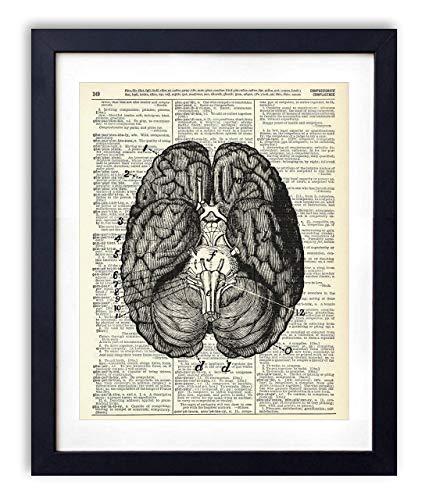 Human Brain Illustration (#2) Upcycled Dictionary Art Print -