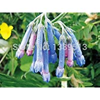 100 / bolsa Hierba de la consuelda - semillas de flores de la herencia para los colores de la casa del jardín siembra…