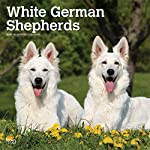 White German Shepherds 2020 12 x 12 Inch Monthly Square Wall Calendar, Animals Dog Breeds 5