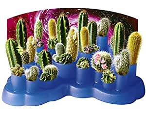 Terra Cotta Colored Odd Pods Cacti Growing Kit
