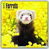Ferrets 2017 Wall by BrownTrout Publishers (2016-08-01)