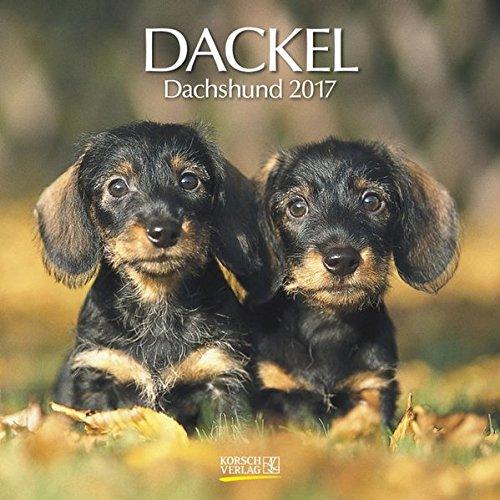 Dackel 2017: Broschürenkalender mit Ferienterminen