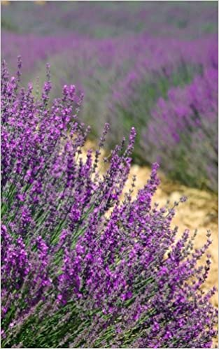 Lavender Fields: Internet Password Organizer Book that will discretely hold all of your website usernames and passwords.  5x8 Softcover Password Keeper Logbook (Discrete Password Logbook) (Volume 1)