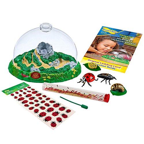 Insect Lore Ladybug Land Gift Set Live Habitat Kit