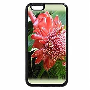 iPhone 6S Plus Case, iPhone 6 Plus Case, Wax Flower