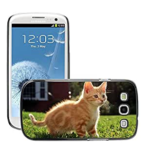 Hot Style Cell Phone PC Hard Case Cover // M00046871 1 kitty fluffy animals pets // Samsung Galaxy S3 i9300