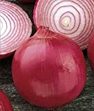 Onion, Short Day, Burgandy Red Onion Seed, Heirloom, Organic, NON-GMO, (25+seeds), Excellent slicing variety for salads or hamburgers.