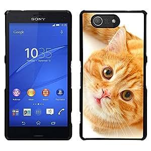EJOY---Cubierta de la caja de protección para la piel dura ** Sony Xperia Z3 Compact ** --Naranja American Shorthair Cat