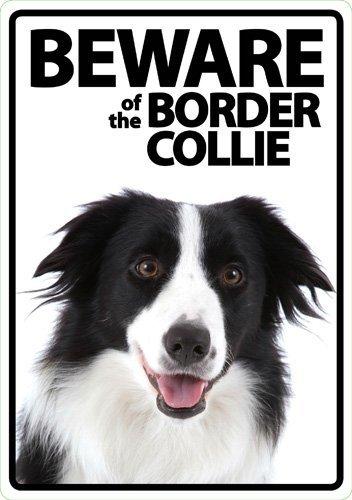 Beware of the Border Collie - Flexi Portrait