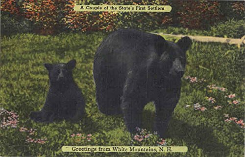 A Couple of the State's First Settlers White Mountains, New Hampshire Original Vintage - New Hampshire Settlers
