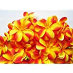 100-Yellow-Red-Hawaiian-Plumeria-Frangipani-Silk-Flower-Heads-3-Artificial-Flowers-Head-Fabric-Floral-Supplies-Wholesale-Lot-for-Wedding-Flowers-Accessories-Make-Bridal-Hair-Clips-Headbands-Dress