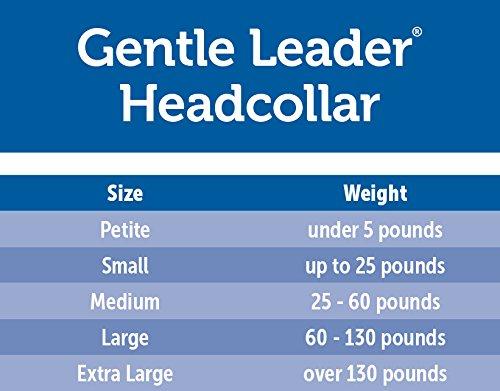 PetSafe Gentle Leader Head Collar with Training DVD, MEDIUM 25-60 LBS., DEEP PURPLE by PetSafe (Image #2)