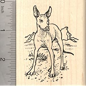 Xolo Dog Rubber Stamp, Mexican Hairless, Xoloitzcuintli 2