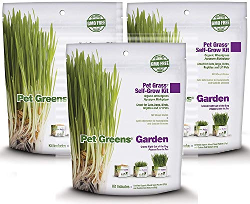 Pet Greens 3 Pack of Pet Grass Organic Wheatgrass Self Grow Kit, Each Pack Contains Soil Mixture and Seed Packet