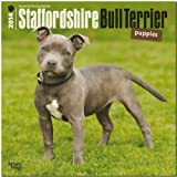 Staffordshire Bull Terrier Puppies 2014 Calendar