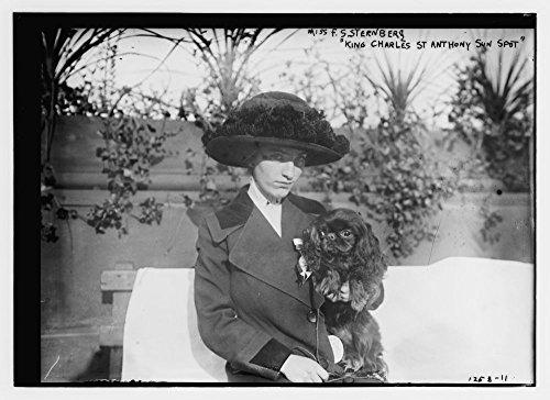 1900 Photo Miss F.S. Sternberg
