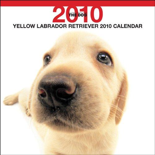 Retriever 2010 Calendar - Labrador Retriever Yellow 2010 Square Wall ARTLIST (The Dog Artlist Collection) (Multilingual Edition)