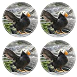 Liili Natural Rubber Round Coasters IMAGE ID: 902458 Tufted puffin flapping wings Lunda cirrhata Aquarium Newport Oregon coast offers