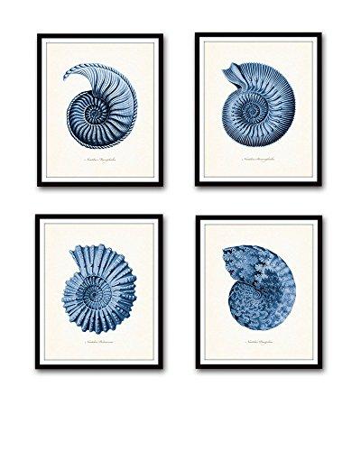 Paper Nautilus Shell - Blue Nautilus Shells Print Set Giclee Fine Art Prints - Unframed