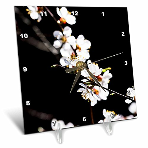 3dRose Alexis Photography - Flowers Sakura - White Japanese apricot blossoms against the black background - 6x6 Desk Clock (Blossom Display Clock)