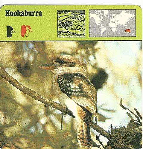 (1975 Editions Rencontre, Animals Card, 21.500 Kookaburra Bird )
