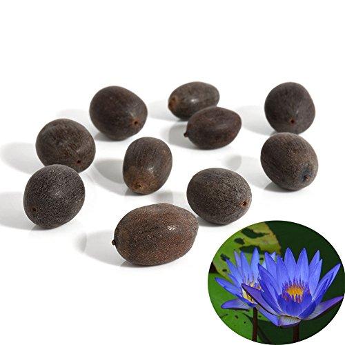 Narutosak 10Pcs Water Lily Flower Plant Bowl Pond Bonsai Seeds Home Garden Yard Decor - ()