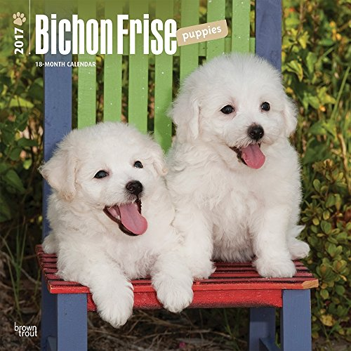 Bichon Frise Puppies 2017 Wall Calendar