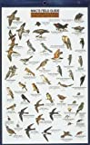 Mac's Field Guide To Southern California Park and Garden Birds (Mac's Guides (Flash Cards))