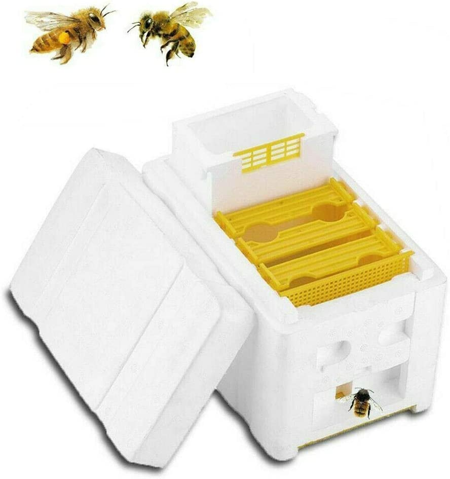 Auto Beekeeping Queen Rearing Box Supplies Beehive Foam Double layer Tool