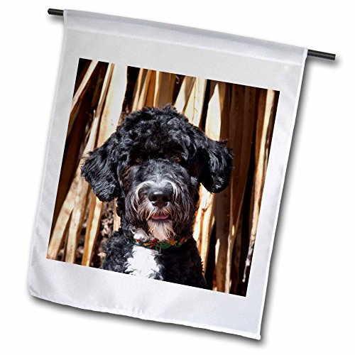 3dRose USA, New Mexico. Portuguese Water Dog Portrait. - Garden Flag, 12 by - New Portuguese Water