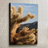 Cholla Cactus I - Fine Art Print on Canvas - Gallery Wrap - 12 x 18 Inch - Ready to Hang Wall Art Printing