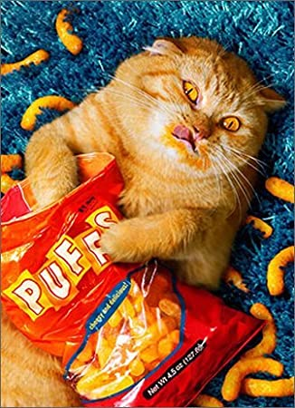 Amazon Cheese Puff Cat Avanti Stand Out Pop Up Birthday Card