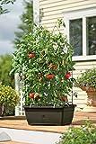 Organic Tomato Success Kit