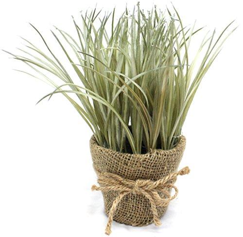 grass pots - 4