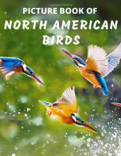 Picture Book Of North American Birds Colorful Extra Large Print Bird Pictures With Names A Gift Present Book For Alzheimer S Patients Seniors Adults With Dementia And Other Life Challenges Books Mountain Top 9798654709356 Amazon Com