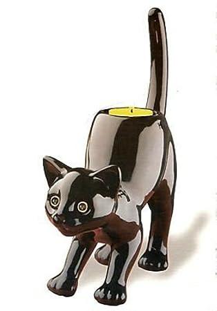 noir chatte chanson