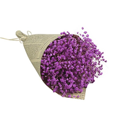 Dried Flower,Han Shi Modern Natural Gypsophila Home Decor Sky Star Babys Breath Gift (L, F)