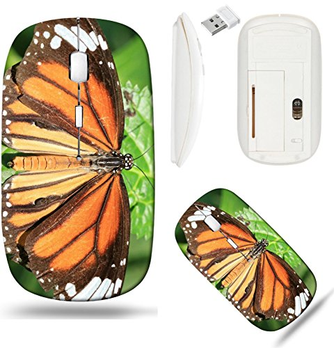Liili Wireless Mouse White Base Travel 2.4G Wireless Mice with USB Receiver, Click with 1000 DPI for notebook, pc, laptop, computer, mac book IMAGE ID 32812387 Common butterfly and green leaf a beauti