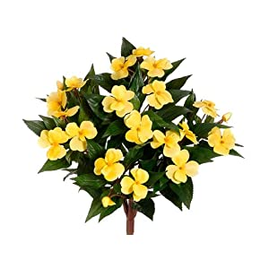 "13.7"" New Guinea Impatiens Bush Yellow (Pack of 6) 14"