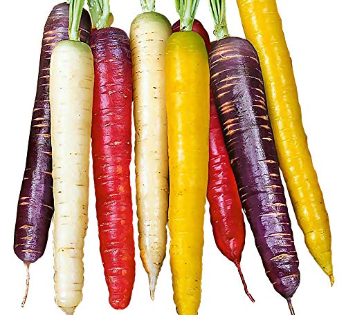 150+ ORGANICALLY Grown Rainbow Blend Carrot Seeds Heirloom Non-GMO, Daucus carota VAR. sativus, Colorful, Healthy, Sweet and Juicy, from USA
