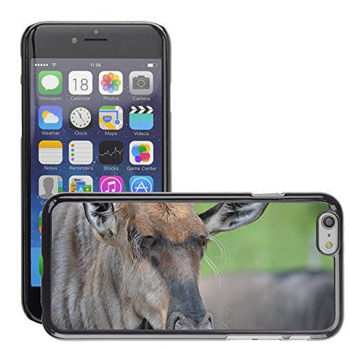 Bild Hart Handy Schwarz Schutz Case Cover Schale Etui // M00134543 Wildebeest Wildtiere Natur Wilde // Apple iPhone 6 PLUS 5.5""