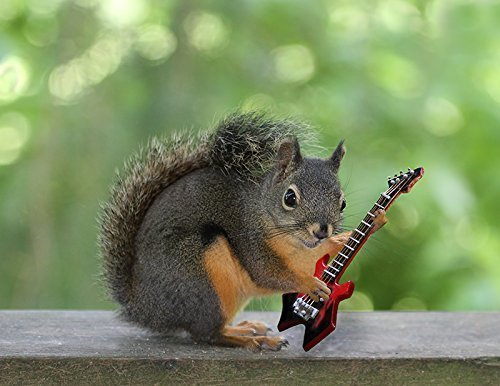 Amazon.com: Squirrel Playing Electric Guitar Photography Print - Musicians  Funny Wall Decor 8.5 x 11: Handmade