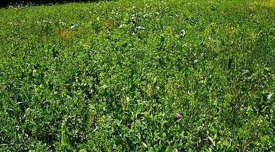 WILDLIFE MIX! DEER PLOT SEED,5 POUND,OATS,PEAS,TURNIP,CLOVER,CHICORY,ALF,LESPED by Unknown (Image #1)