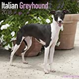 Italian Greyhound Calendar - Dog Breed Calendars - 2017 - 2018 wall Calendars - 16 Month by Avonside